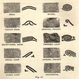 details of fingerprint pattern specially demakating loop, whorl etc..